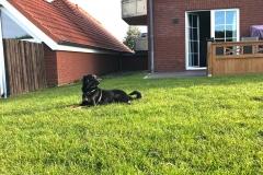 Hund-im-Garten