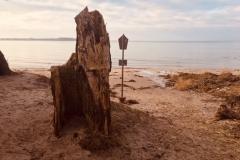Baumstumpen am Strand